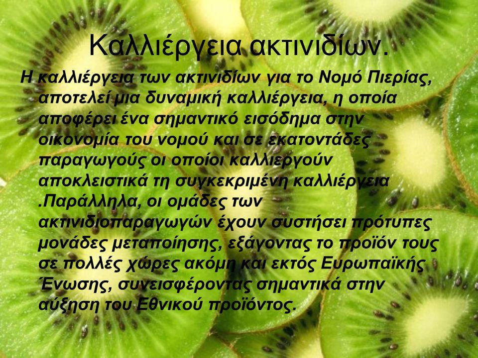 Καλλιέργεια ακτινιδίων.
