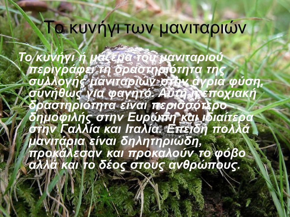 Το κυνήγι των μανιταριών Το κυνήγι ή μάζεμα του μανιταριού περιγράφει τη δραστηριότητα της συλλογής μανιταριών στην άγρια φύση, συνήθως για φαγητό.