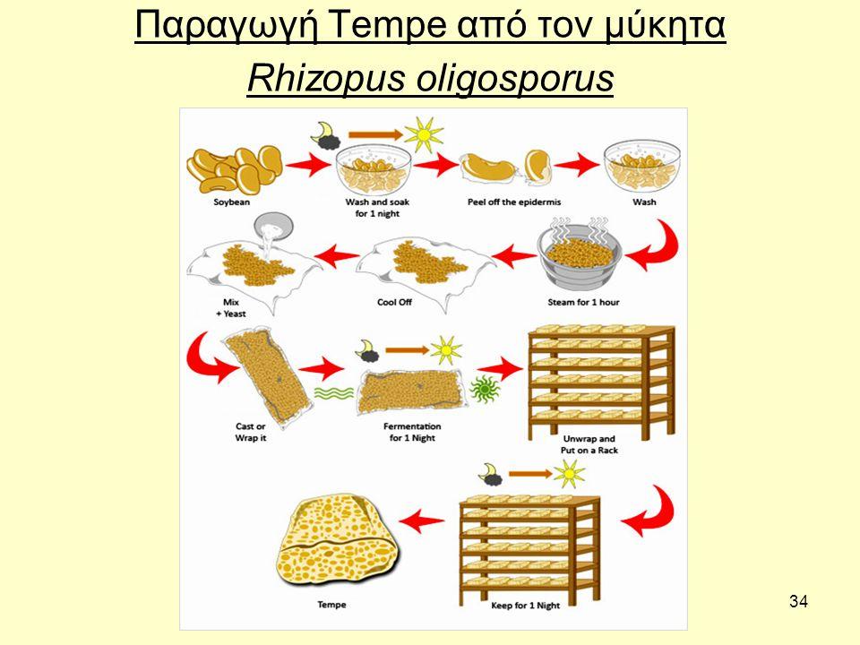 34 Παραγωγή Tempe από τον μύκητα Rhizopus oligosporus