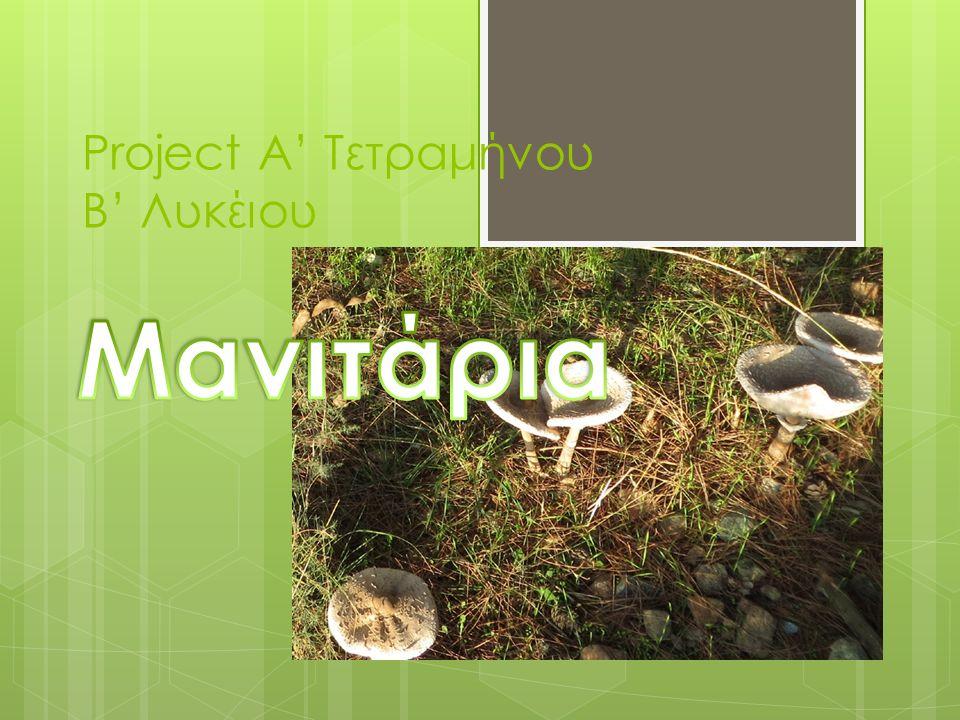 Project Α' Τετραμήνου Β' Λυκέιου