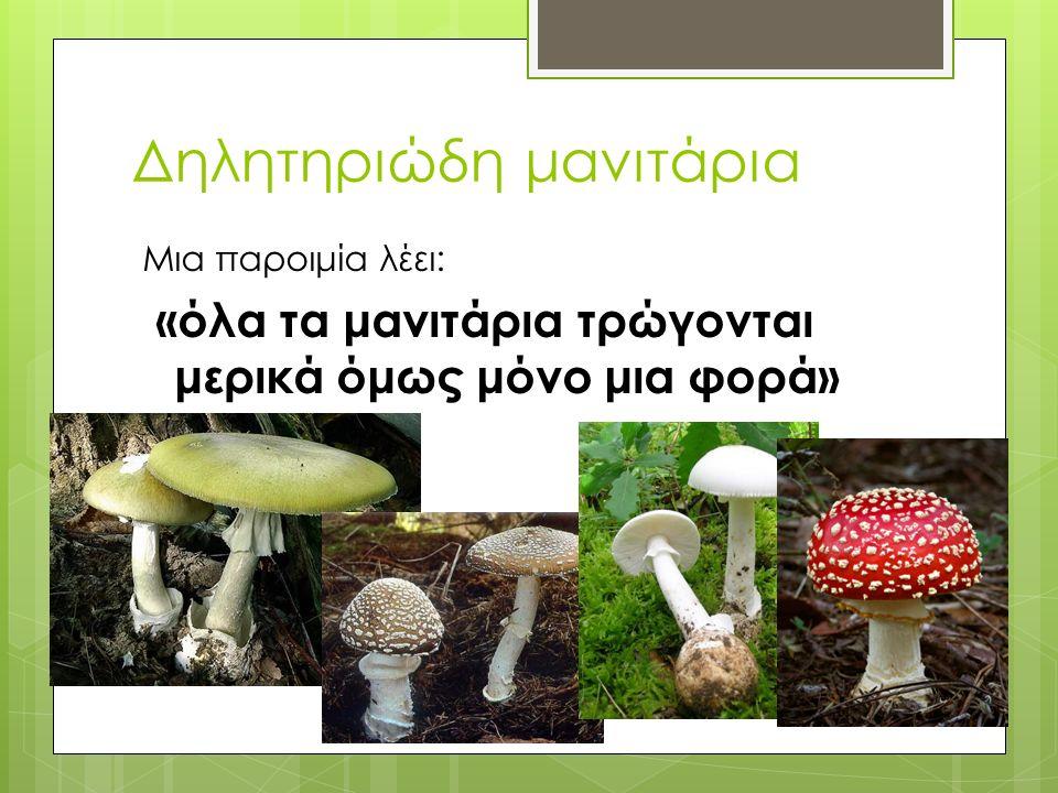 Δηλητηριώδη μανιτάρια Μια παροιμία λέει: «όλα τα μανιτάρια τρώγονται μερικά όμως μόνο μια φορά»