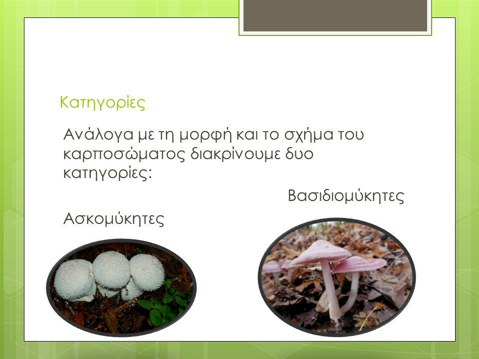 Είδη μανιταριών  Τα παρασιτικά μανιτάρια  Τα σαπροφυτικά μανιτάρια  Τα μυκορριζικά ή συμβιωτικά μανιτάρια