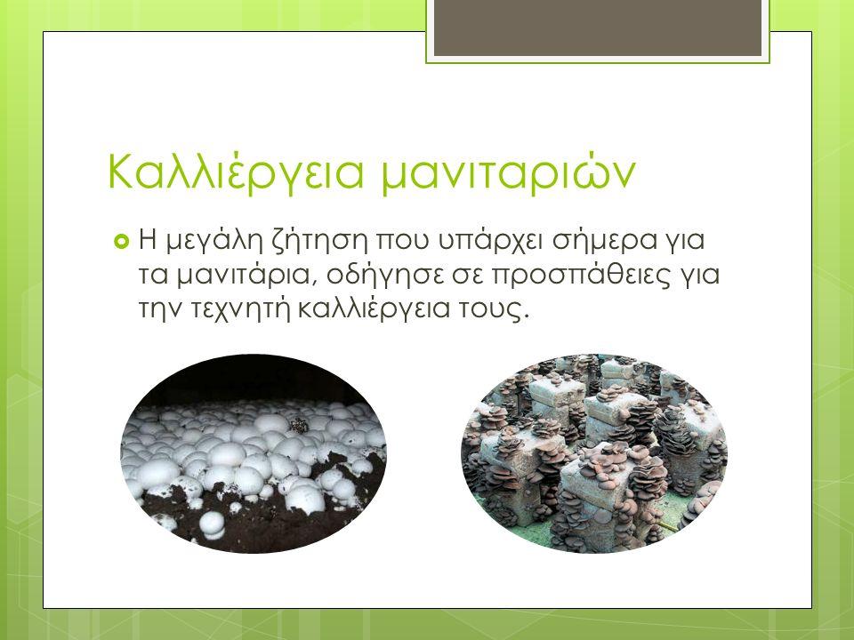Καλλιέργεια μανιταριών  Η μεγάλη ζήτηση που υπάρχει σήμερα για τα μανιτάρια, οδήγησε σε προσπάθειες για την τεχνητή καλλιέργεια τους.