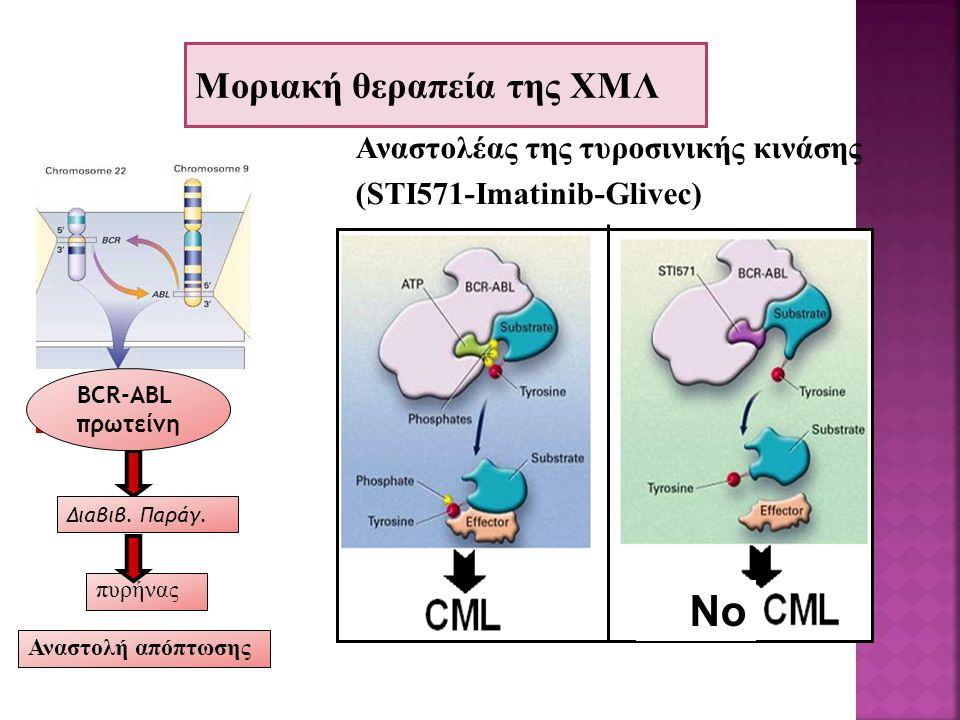 No Μοριακή θεραπεία της ΧΜΛ Αναστολέας της τυροσινικής κινάσης (STI571-Imatinib-Glivec) πυρήνας Διαβιβ. Παράγ. Αναστολή απόπτωσης BCR-ABL πρωτείνη