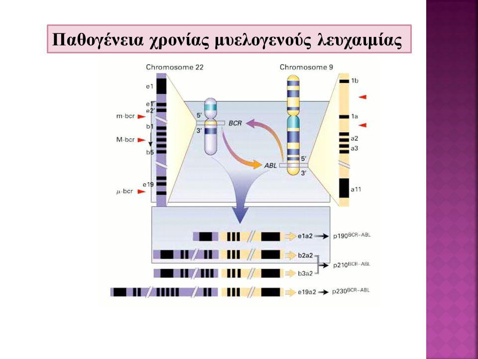 Bcr-abl γονίδιο -BCR-ABL πρωτεϊνη BCR-ABL πυρήνας Διαβιβ.