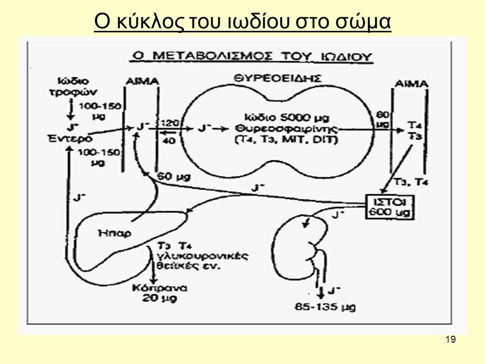 19 Ο κύκλος του ιωδίου στο σώμα
