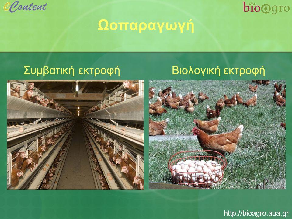 http://bioagro.aua.gr Χαρακτηριστικά βιολογικής εκτροφής ορνίθων ωοπαραγωγής  Μικρή πυκνότητα εκτροφής  Πρόσβαση σε υπαίθριο χώρο  Χρήση βιολογικών ζωοτροφών  Απαγορεύεται η κοπή του ράμφους και η εκτροφή σε κλωβούς  Min 8 ώρες σκοτάδι ανά 24 ώρες για την ξεκούραση των πτηνών