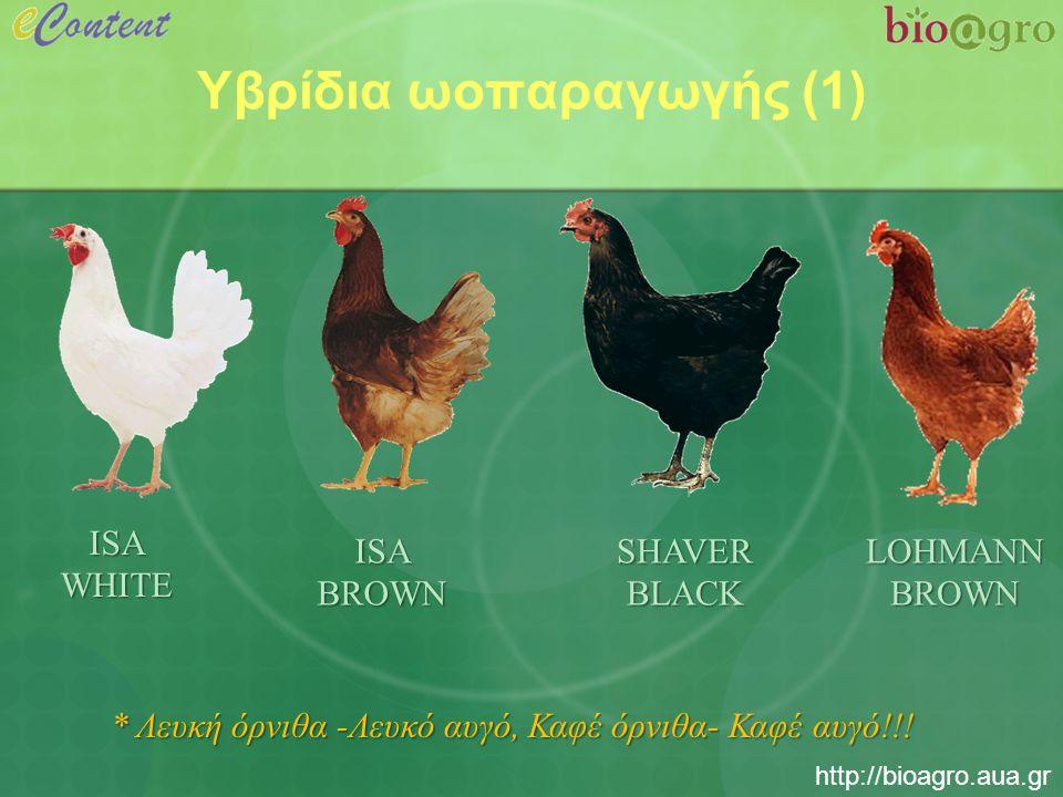 http://bioagro.aua.gr Υβρίδια ωοπαραγωγής (2) * Καμπύλη ανάπτυξης υβριδίου ωοπαραγωγής ISA WHITE