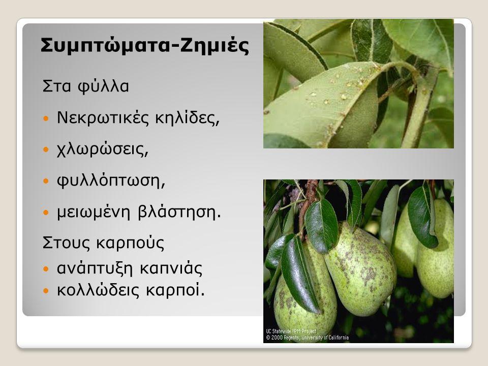 Συμπτώματα-Ζημιές Στα φύλλα Νεκρωτικές κηλίδες, χλωρώσεις, φυλλόπτωση, μειωμένη βλάστηση.