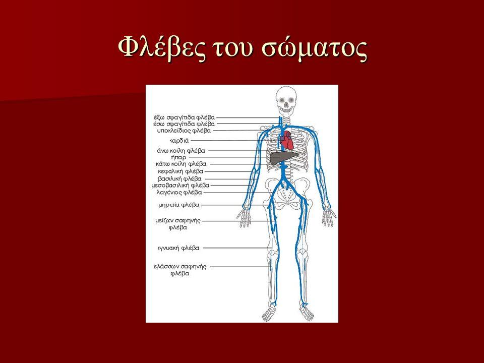 Φλέβες του σώματος