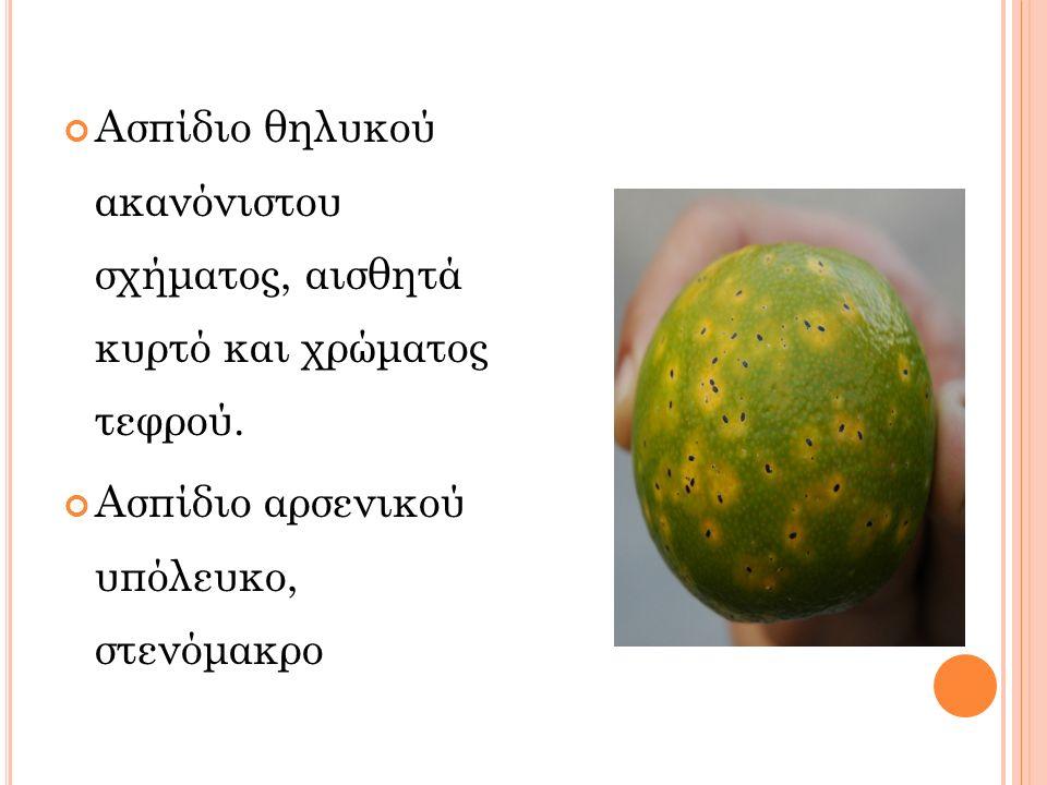 Ασπίδιο θηλυκού ακανόνιστου σχήματος, αισθητά κυρτό και χρώματος τεφρού. Ασπίδιο αρσενικού υπόλευκο, στενόμακρο