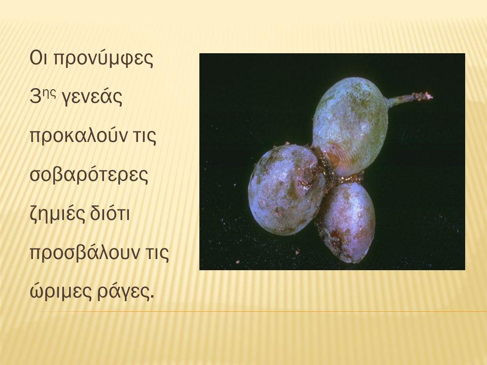Πολυφάγο έντομο.Αμπέλι, συκιά, μουριά, πικροδάφνη, κ.α.