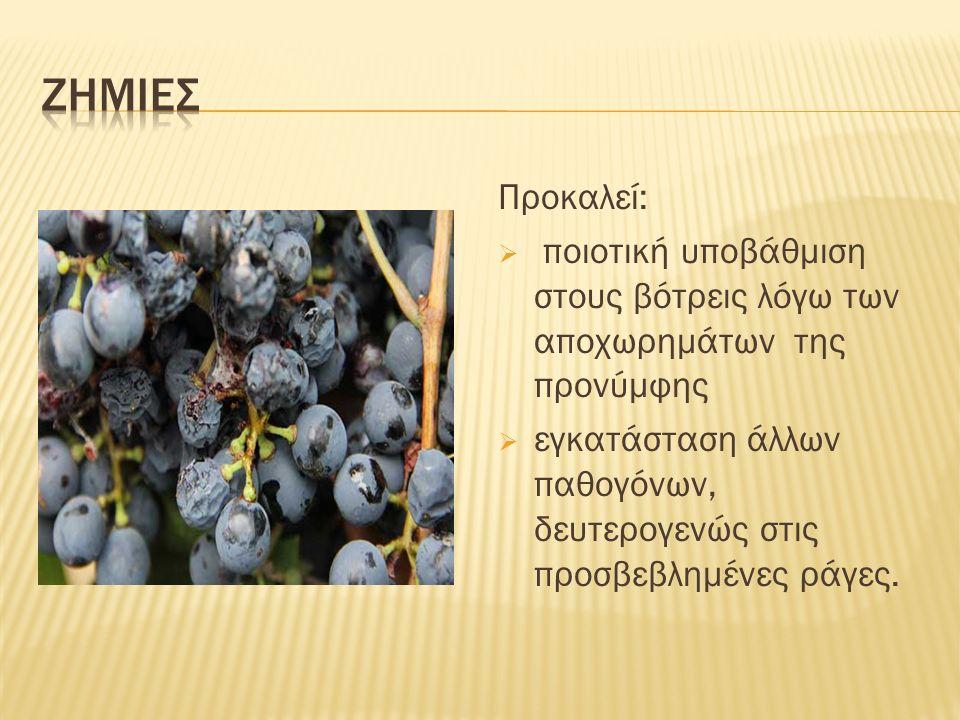  Οι προνύμφες της 1ης γενεάς, διασπείρονται και εγκαθίστανται κυρίως στα φύλλα.