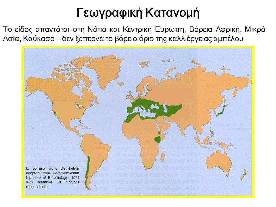 Γεωγραφική Κατανομή Το είδος απαντάται στη Νότια και Κεντρική Ευρώπη, Βόρεια Αφρική, Μικρά Ασία, Καύκασο – δεν ξεπερνά το βόρειο όριο της καλλιέργειας αμπέλου L.