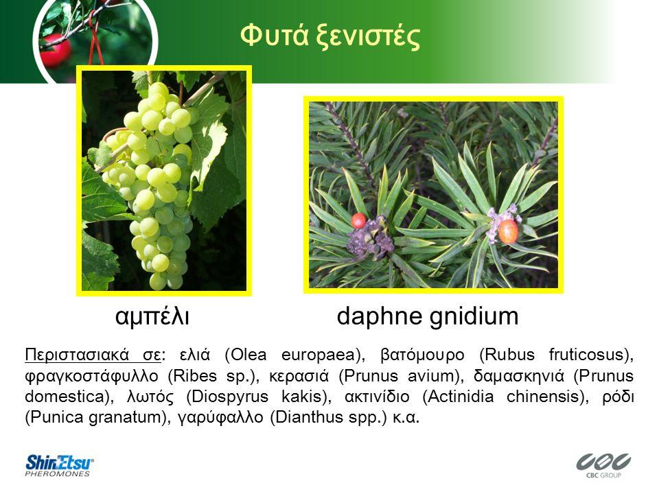 Φυτά ξενιστές αμπέλι daphne gnidium Περιστασιακά σε: ελιά (Olea europaea), βατόμουρο (Rubus fruticosus), φραγκοστάφυλλο (Ribes sp.), κερασιά (Prunus avium), δαμασκηνιά (Prunus domestica), λωτός (Diospyrus kakis), ακτινίδιο (Actinidia chinensis), ρόδι (Punica granatum), γαρύφαλλο (Dianthus spp.) κ.α.