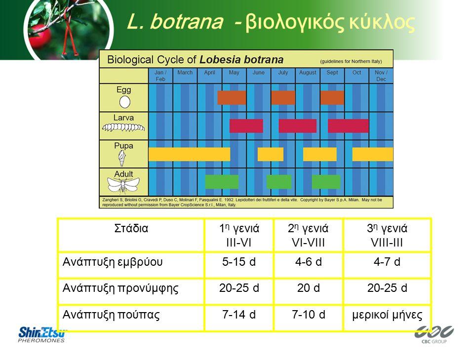 Στάδια1 η γενιά III-VI 2 η γενιά VI-VIII 3 η γενιά VIII-III Ανάπτυξη εμβρύου5-15 d4-6 d4-7 d Ανάπτυξη προνύμφης20-25 d20 d20-25 d Ανάπτυξη πούπας7-14 d7-10 dμερικοί μήνες L.