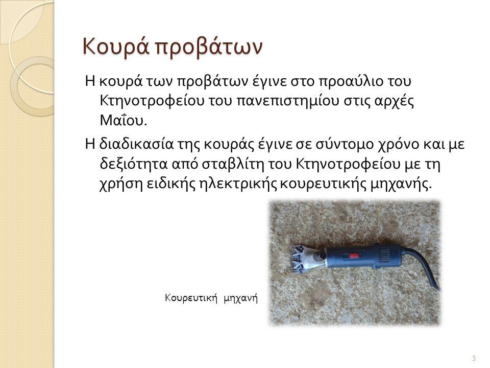 Κουρά προβάτων Η κουρά των προβάτων έγινε στο προαύλιο του Κτηνοτροφείου του πανεπιστημίου στις αρχές Μαΐου. Η διαδικασία της κουράς έγινε σε σύντομο
