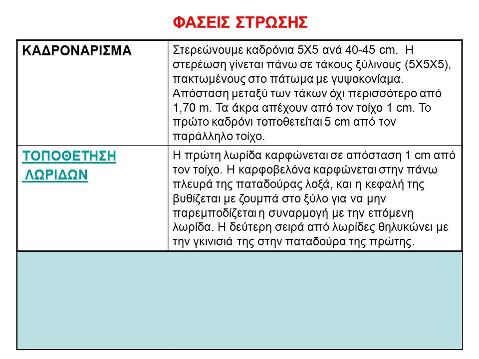 Αγγέλα Καλκούνη9 ΦΑΣΕΙΣ ΣΤΡΩΣΗΣ ΚΑΔΡΟΝΑΡΙΣΜΑ Στερεώνουμε καδρόνια 5Χ5 ανά 40-45 cm.