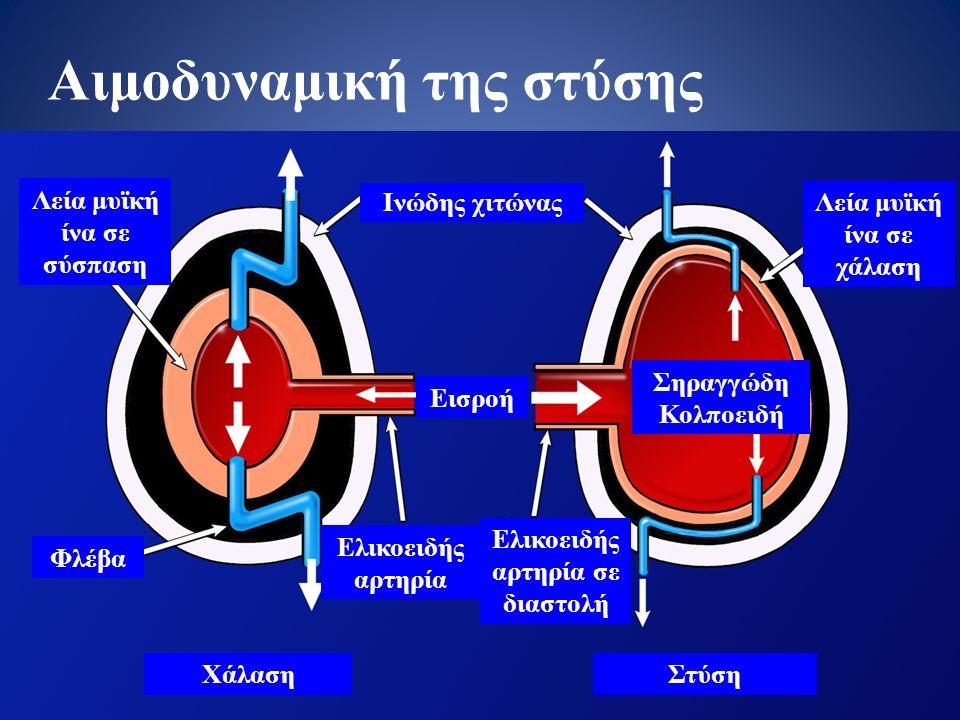 Χάλαση Ελικοειδής αρτηρία Λεία μυϊκή ίνα σε σύσπαση Ελικοειδής αρτηρία σε διαστολή Ινώδης χιτώνας Λεία μυϊκή ίνα σε χάλαση Σηραγγώδη Κολποειδή Φλέβα Εισροή Στύση Αιμοδυναμική της στύσης