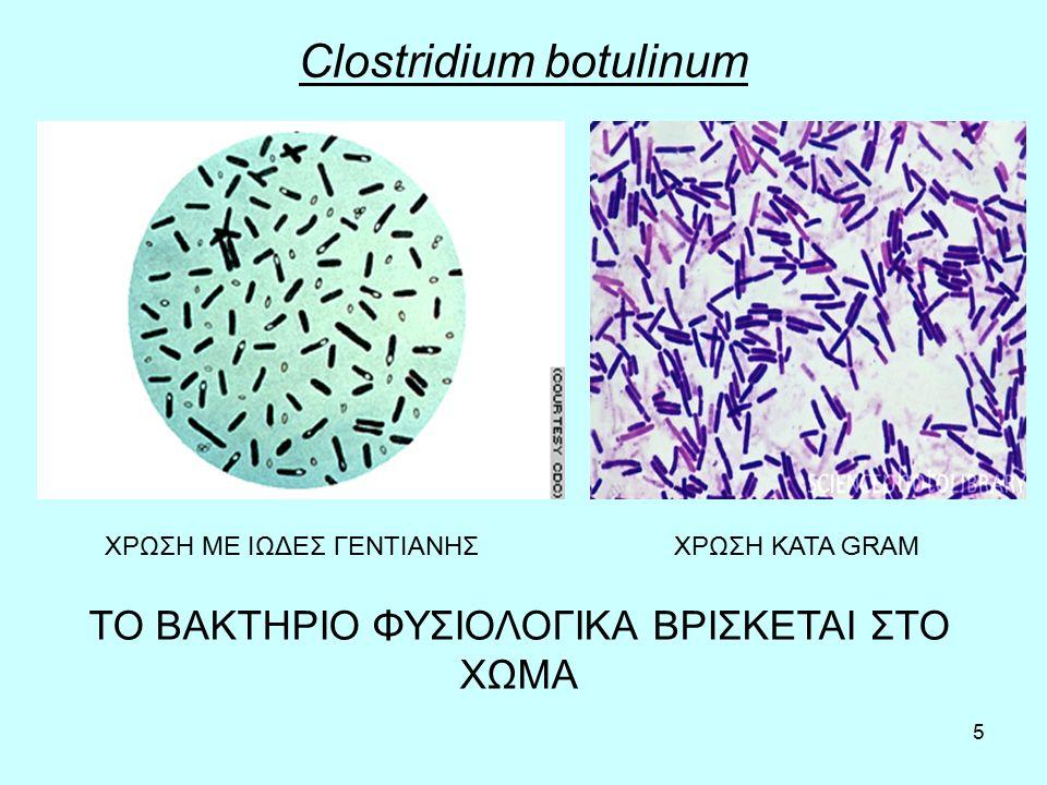 5 Clostridium botulinum ΧΡΩΣΗ ΜΕ ΙΩΔΕΣ ΓΕΝΤΙΑΝΗΣΧΡΩΣΗ ΚΑΤΑ GRAM ΤΟ ΒΑΚΤΗΡΙΟ ΦΥΣΙΟΛΟΓΙΚΑ ΒΡΙΣΚΕΤΑΙ ΣΤΟ ΧΩΜΑ
