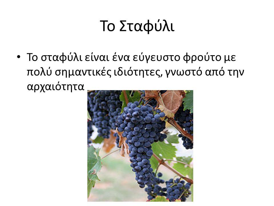 Το Σταφύλι Το σταφύλι είναι ένα εύγευστο φρούτο με πολύ σημαντικές ιδιότητες, γνωστό από την αρχαιότητα