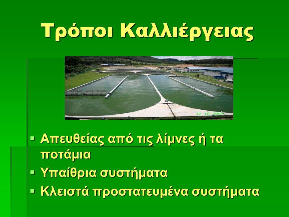 Τρόποι Καλλιέργειας  Απευθείας από τις λίμνες ή τα ποτάμια  Υπαίθρια συστήματα  Υπαίθρια συστήματα  Κλειστά προστατευμένα συστήματα