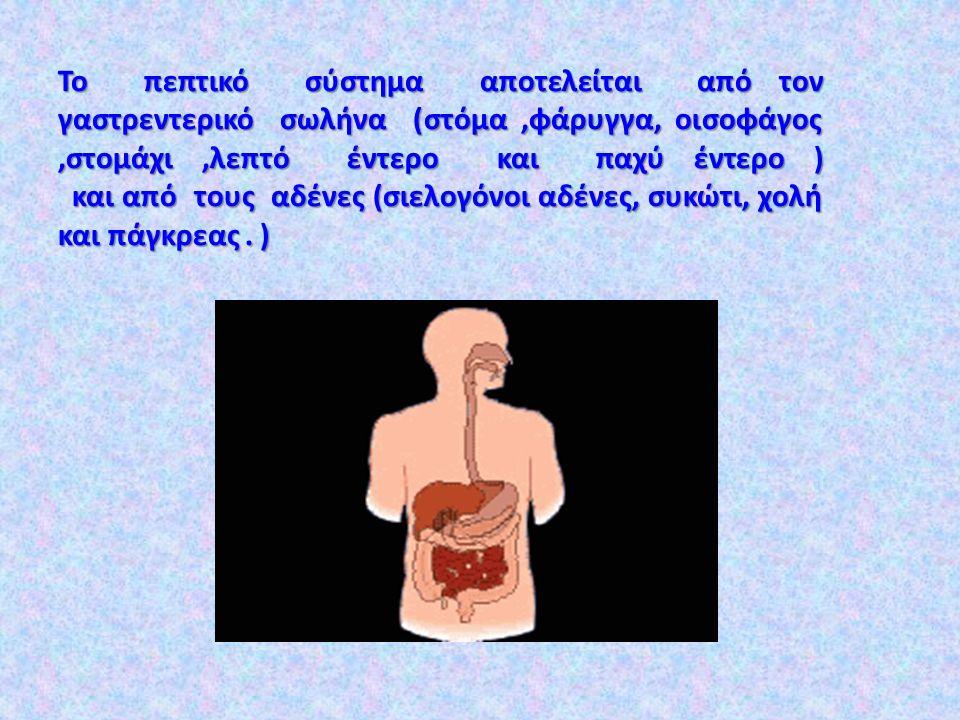 Από τι αποτελείται το πεπτικό σύστημα;