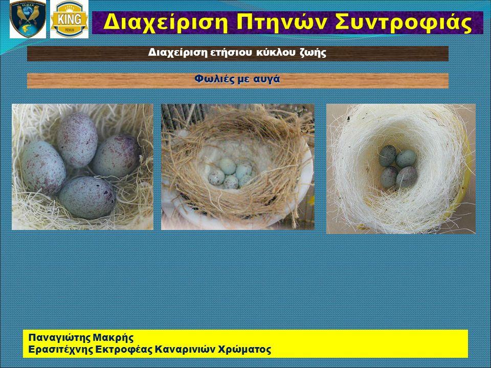 Φωλιές με αυγά Παναγιώτης Μακρής Ερασιτέχνης Εκτροφέας Καναρινιών Χρώματος Διαχείριση ετήσιου κύκλου ζωής