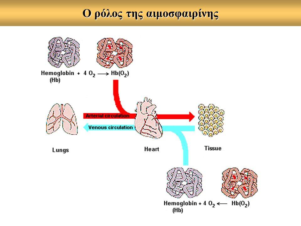 O ρόλος της αιμοσφαιρίνης
