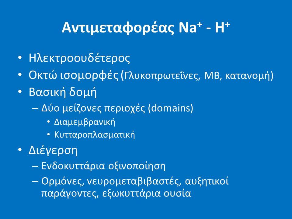 Αντιμεταφορέας Na + - H + Ηλεκτροουδέτερος Οκτώ ισομορφές ( Γλυκοπρωτεΐνες, ΜΒ, κατανομή) Βασική δομή – Δύο μείζονες περιοχές (domains) Διαμεμβρανική Κυτταροπλασματική Διέγερση – Ενδοκυττάρια οξινοποίηση – Ορμόνες, νευρομεταβιβαστές, αυξητικοί παράγοντες, εξωκυττάρια ουσία