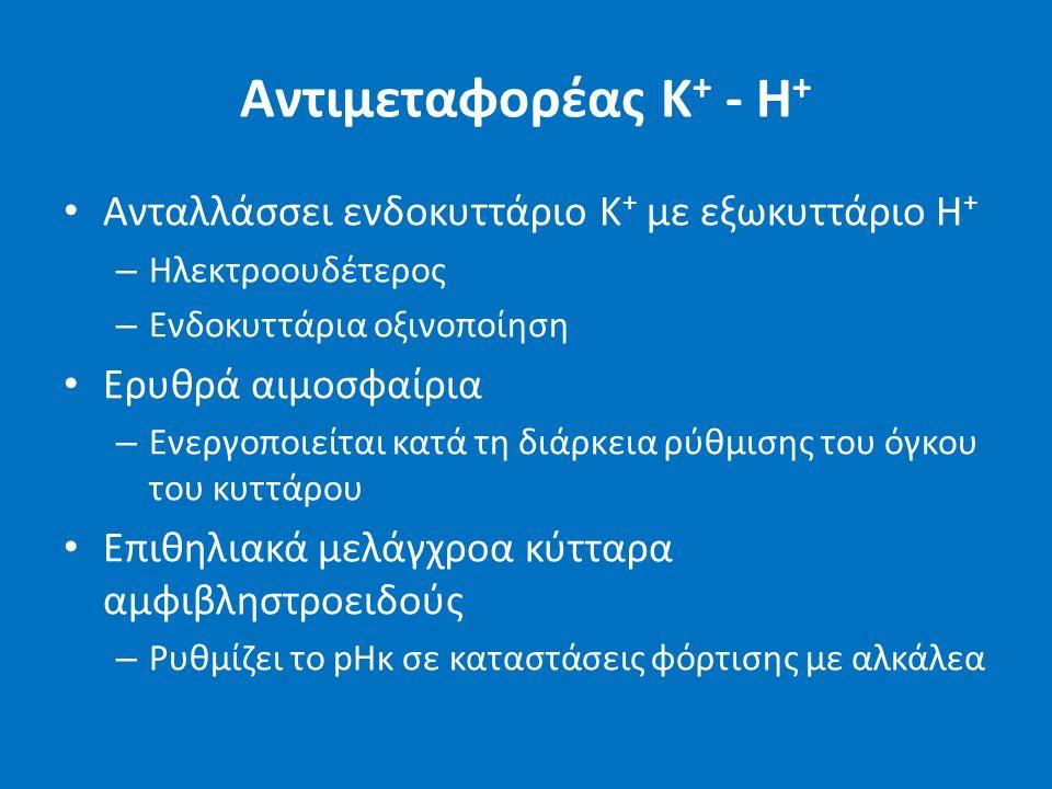 Αντιμεταφορέας Κ + - H + Ανταλλάσσει ενδοκυττάριο Κ + με εξωκυττάριο Η + – Ηλεκτροουδέτερος – Ενδοκυττάρια οξινοποίηση Ερυθρά αιμοσφαίρια – Ενεργοποιείται κατά τη διάρκεια ρύθμισης του όγκου του κυττάρου Επιθηλιακά μελάγχροα κύτταρα αμφιβληστροειδούς – Ρυθμίζει το pHκ σε καταστάσεις φόρτισης με αλκάλεα