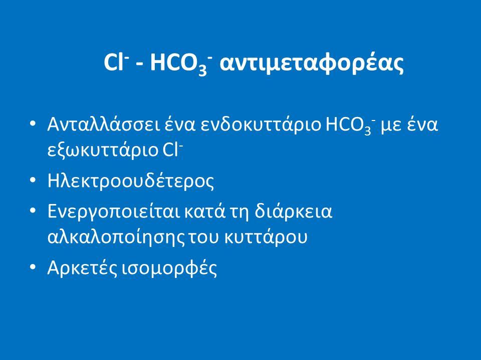 Cl - - HCO 3 - αντιμεταφορέας Ανταλλάσσει ένα ενδοκυττάριο HCO 3 - με ένα εξωκυττάριο Cl - Ηλεκτροουδέτερος Ενεργοποιείται κατά τη διάρκεια αλκαλοποίησης του κυττάρου Αρκετές ισομορφές