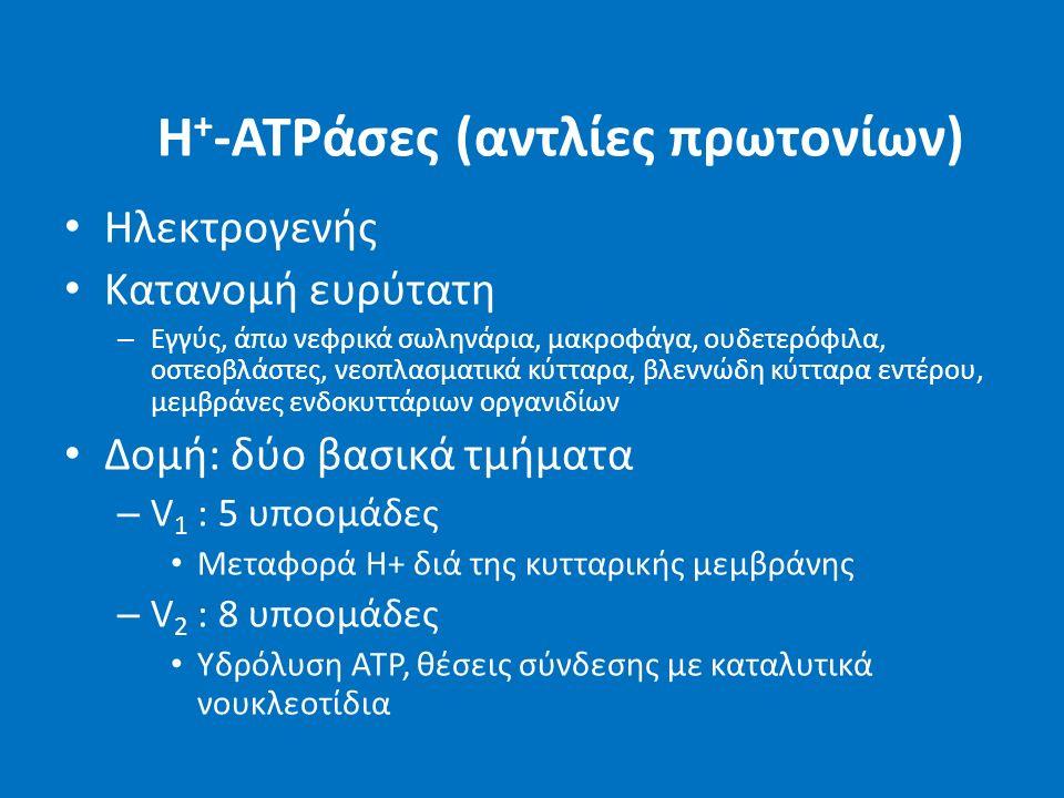H + -ATPάσες (αντλίες πρωτονίων) Ηλεκτρογενής Κατανομή ευρύτατη – Εγγύς, άπω νεφρικά σωληνάρια, μακροφάγα, ουδετερόφιλα, οστεοβλάστες, νεοπλασματικά κ