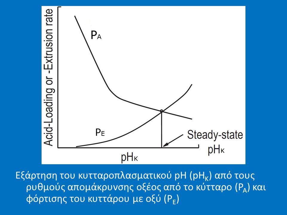 Εξάρτηση του κυτταροπλασματικού pH (pH K ) από τους ρυθμούς απομάκρυνσης οξέος από το κύτταρο (P A ) και φόρτισης του κυττάρου με οξύ (P E )