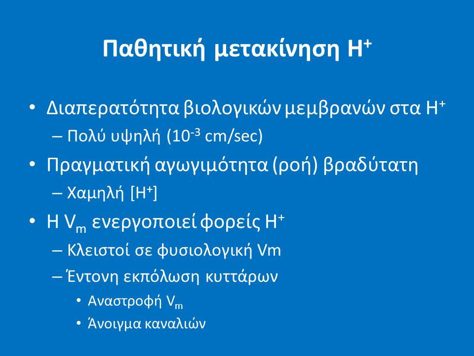 Παθητική μετακίνηση H + Διαπερατότητα βιολογικών μεμβρανών στα H + – Πολύ υψηλή (10 -3 cm/sec) Πραγματική αγωγιμότητα (ροή) βραδύτατη – Χαμηλή [H + ] H V m ενεργοποιεί φορείς Η + – Κλειστοί σε φυσιολογική Vm – Έντονη εκπόλωση κυττάρων Αναστροφή V m Άνοιγμα καναλιών