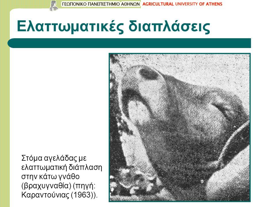 Ελαττωματικές διαπλάσεις Στόμα αγελάδας με ελαττωματική διάπλαση στην κάτω γνάθο (βραχυγναθία) (πηγή: Καραντούνιας (1963)).