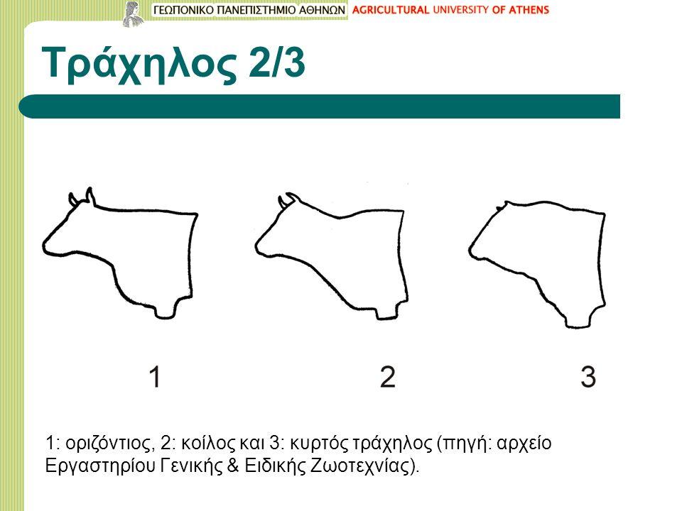 Τράχηλος 2/3 1: οριζόντιος, 2: κοίλος και 3: κυρτός τράχηλος (πηγή: αρχείο Εργαστηρίου Γενικής & Ειδικής Ζωοτεχνίας).