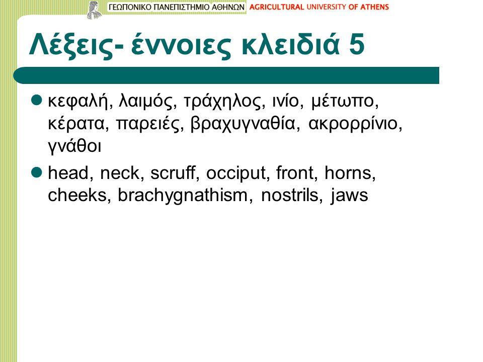 Λέξεις- έννοιες κλειδιά 5 κεφαλή, λαιμός, τράχηλος, ινίο, μέτωπο, κέρατα, παρειές, βραχυγναθία, ακρορρίνιο, γνάθοι head, neck, scruff, occiput, front, horns, cheeks, brachygnathism, nostrils, jaws
