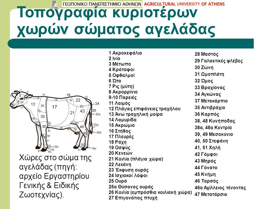 Τοπογραφία κυριοτέρων χωρών σώματος αγελάδας 1 Ακροκεφάλιο 2 Ινίο 3 Μέτωπο 4 Κρόταφοι 5 Οφθαλμοί 6 Ώτα 7 Ρις (μύτη) 8 Ακρορρίνιο 9-10 Παρειές 11 Λαιμός 12 Πλάγιες επιφάνειες τραχήλου 13 Άνω τραχηλική μοίρα 14 Λαμυρίδα 15 Ακρώμιο 16 Στήθος 17 Πλευρές 18 Ράχη 19 Οσφύς 20 Κενεών 21 Κοιλία (πλάγια χώρα) 22 Λεκάνη 23 Έκφυση ουράς 24 Ισχιακοί λόφοι 25 Ουρά 25α Θύσανος ουράς 26 Κοιλία (εμπρόσθια κοιλιακή χώρα) 27 Επιγονάτιος πτυχή 28 Μαστός 29 Γαλακτικές φλέβες 30 Ζώνη 31 Ωμοπλάτη 32 Ώμος 33 Βραχίονας 34 Αγκώνας 37 Μετακάρπιο 35 Αντιβράχιο 36 Καρπός 38, 48 Κυνήποδας 38α, 48α Κεντρία 39, 49 Μεσοκύνιο 40, 50 Στεφάνη 41, 51 Χηλή 42 Γόμφοι 43 Μηρός 44 Γόνατο 45 Κνήμη 46 Ταρσός 46α Αχίλλειος τένοντας 47 Μετατάρσιο Χώρες στο σώμα της αγελάδας (πηγή: αρχείο Εργαστηρίου Γενικής & Ειδικής Ζωοτεχνίας).