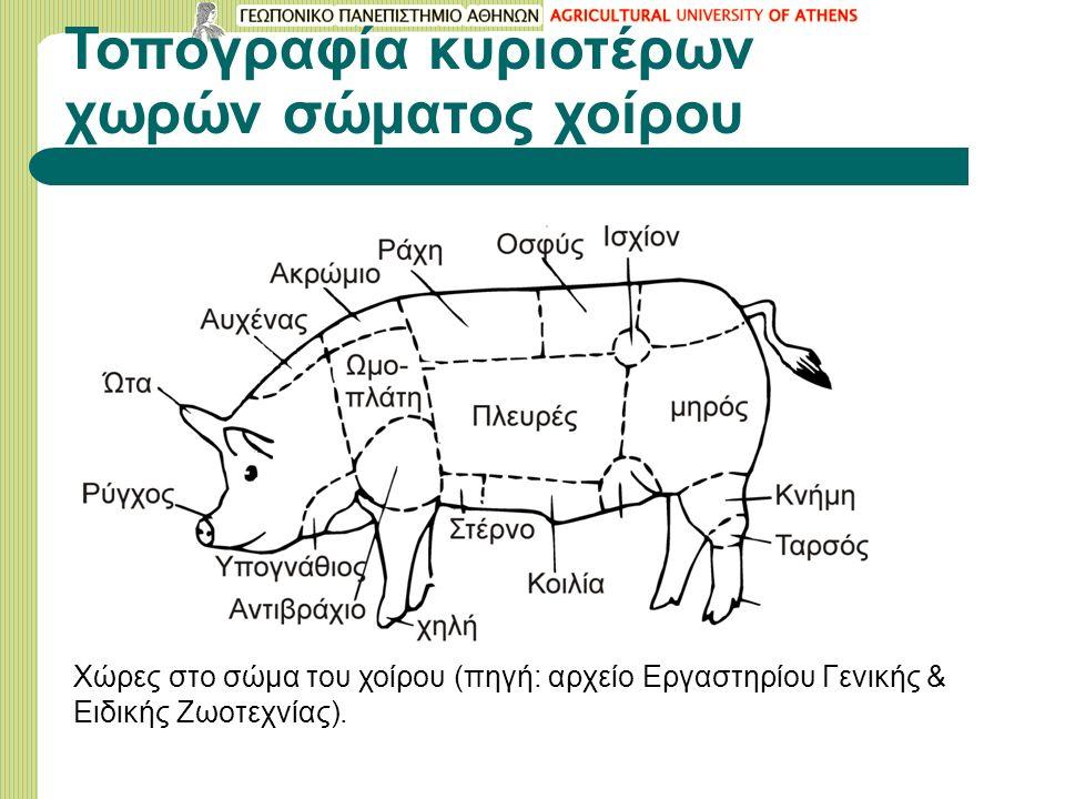 Τοπογραφία κυριοτέρων χωρών σώματος χοίρου Χώρες στο σώμα του χοίρου (πηγή: αρχείο Εργαστηρίου Γενικής & Ειδικής Ζωοτεχνίας).