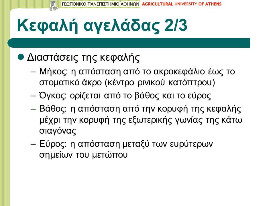 Κεφαλή αγελάδας 3/3 Είδη κεφαλής ανάλογα με την κατατομή, την κατασκευή και το μήκος (Α: κεφαλή με κυρτή κατατομή, Β: κεφαλή με κοίλη κατατομή, Γ: μακριά κεφαλή λόγω πείνας σε νεαρή ηλικία και Δ, Ε: Χονδροειδείς κεφαλές) (πηγή: Καραντούνιας, (1963)).