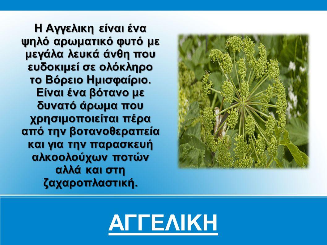 Βαλεριάνα Η Βαλεριάνα είναι ένα από τα πιο γνωστά βότανα στην υφήλιο αφού χρησιμοποιείται για πάνω από 2.000 χρόνια.