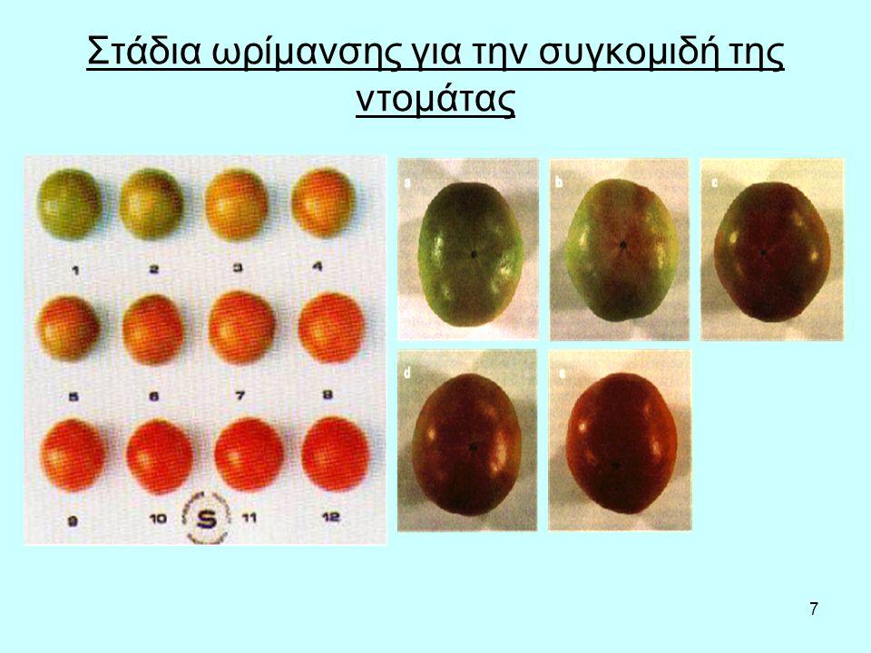 7 Στάδια ωρίμανσης για την συγκομιδή της ντομάτας
