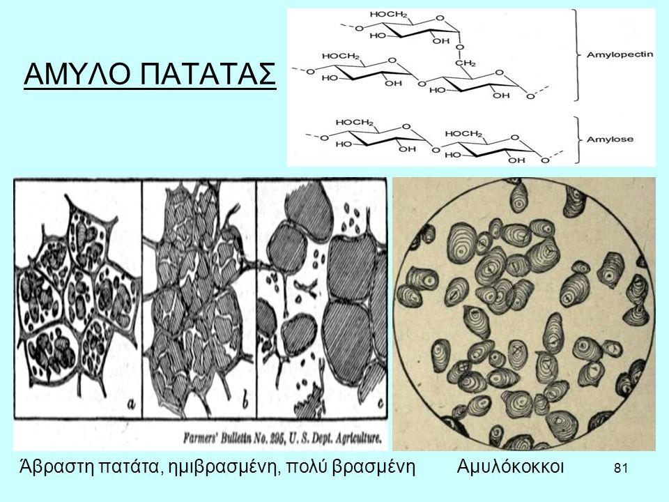 81 ΑΜΥΛΟ ΠΑΤΑΤΑΣ ΑμυλόκοκκοιΆβραστη πατάτα, ημιβρασμένη, πολύ βρασμένη