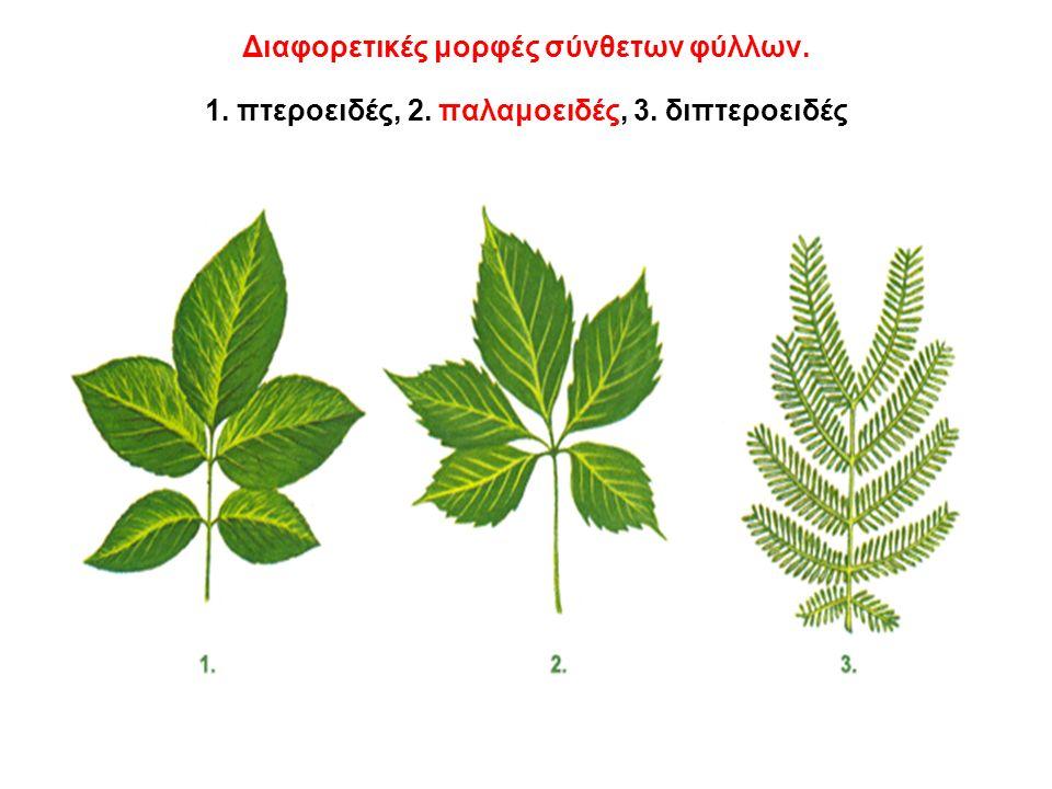 Διαφορετικές μορφές σύνθετων φύλλων. 1. πτεροειδές, 2. παλαμοειδές, 3. διπτεροειδές