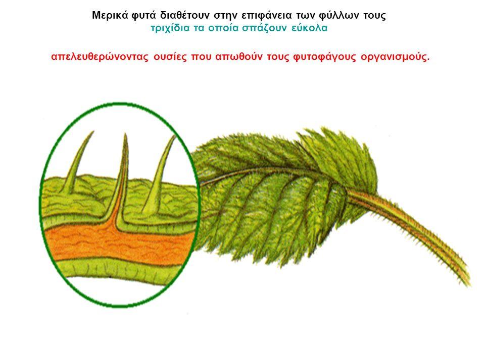Μερικά φυτά διαθέτουν στην επιφάνεια των φύλλων τους τριχίδια τα οποία σπάζουν εύκολα απελευθερώνοντας ουσίες που απωθούν τους φυτοφάγους οργανισμούς.