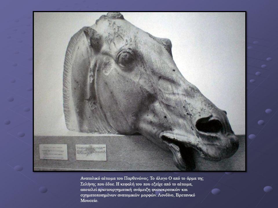 Ανατολικό αέτωμα του Παρθενώνος. Το άλογο Ο από το άρμα της Σελήνης που έδυε.