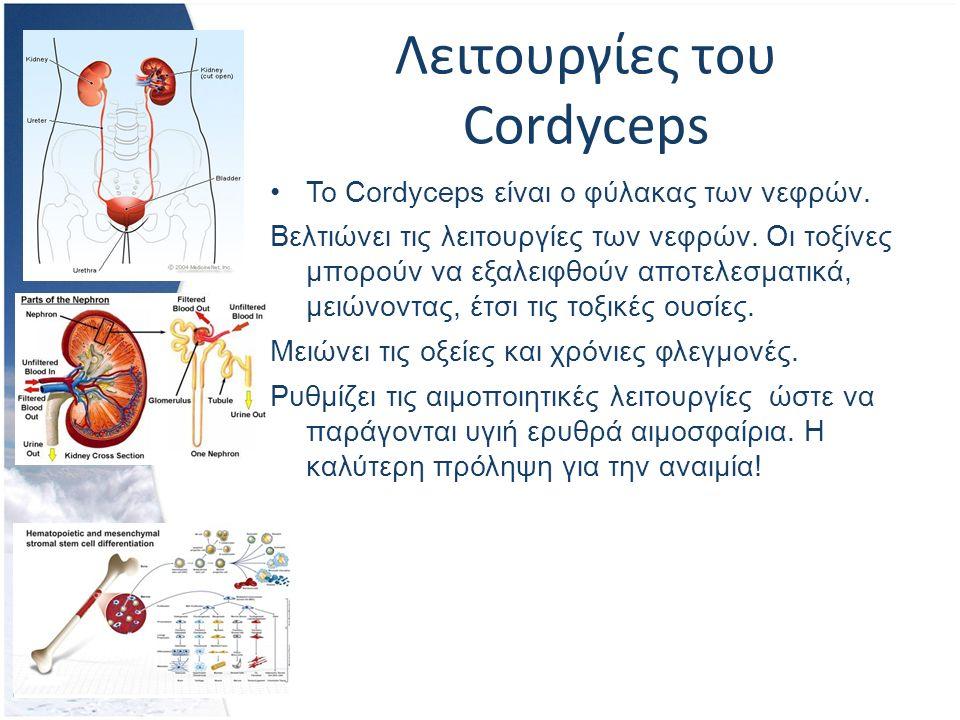 Λειτουργίες του Cordyceps Το Cordyceps είναι ο φύλακας των νεφρών.