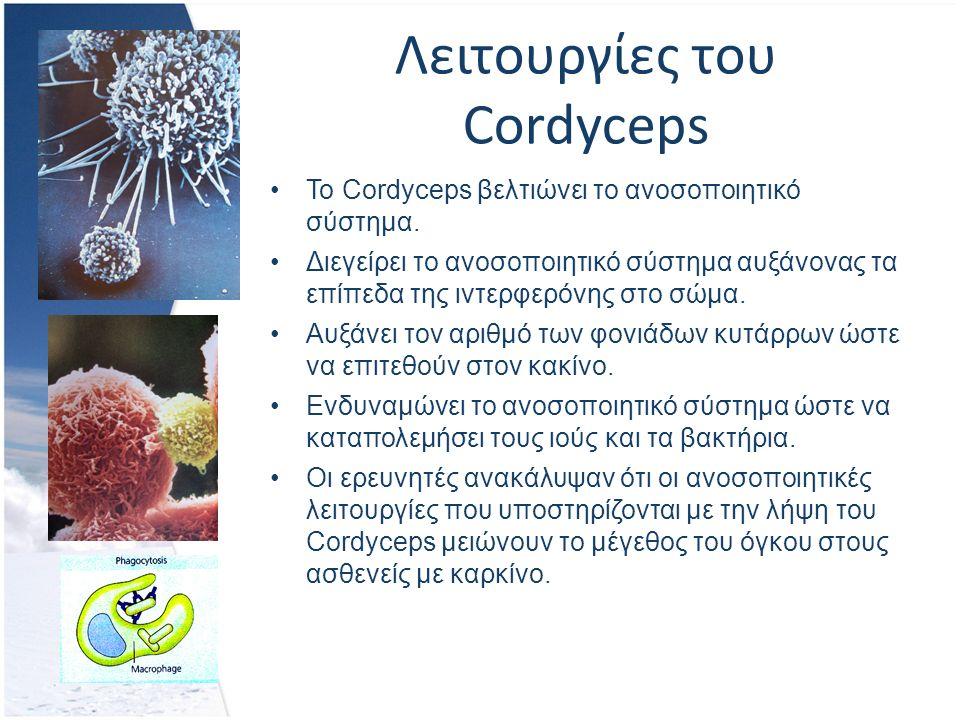 Λειτουργίες του Cordyceps Το Cordyceps βελτιώνει το ανοσοποιητικό σύστημα.