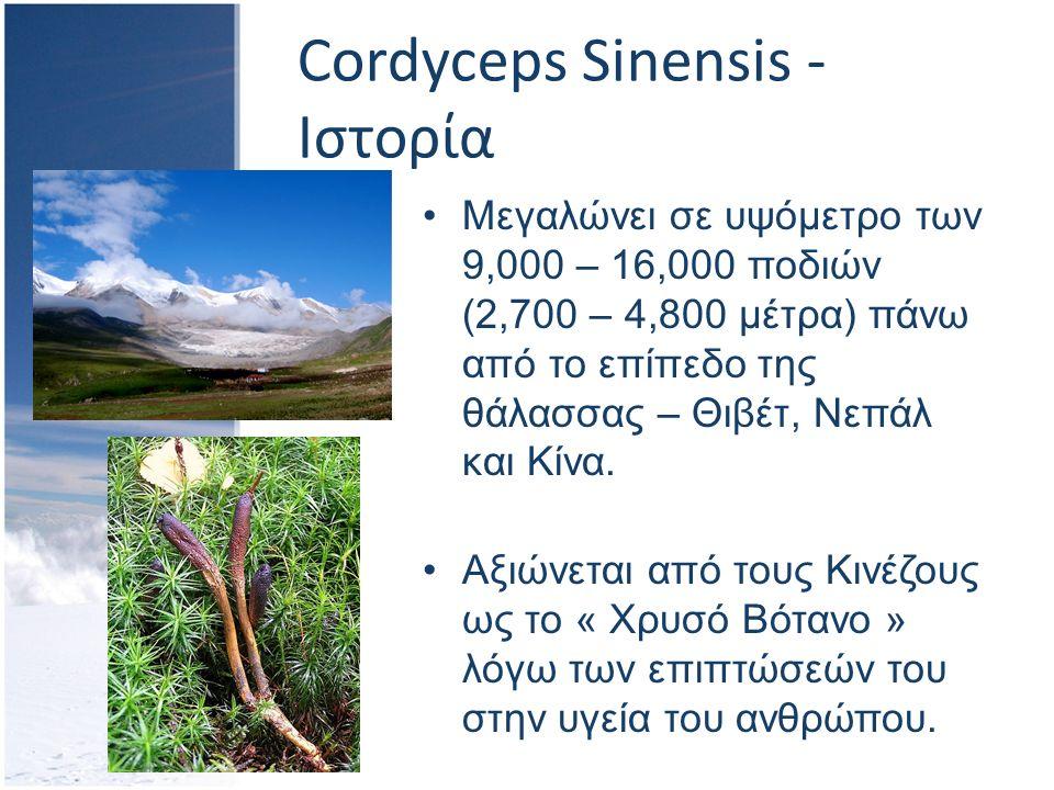 Cordyceps Sinensis - Ιστορία Μεγαλώνει σε υψόμετρο των 9,000 – 16,000 ποδιών (2,700 – 4,800 μέτρα) πάνω από το επίπεδο της θάλασσας – Θιβέτ, Νεπάλ και Κίνα.